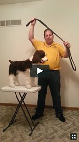 Standard Slip Lead Instructional Video